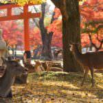 奈良での出会い