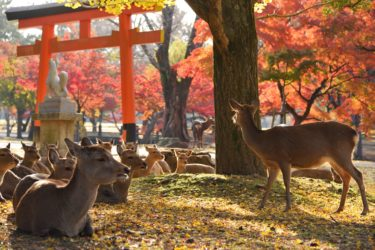 奈良で異性との出会いを求める方法まとめ